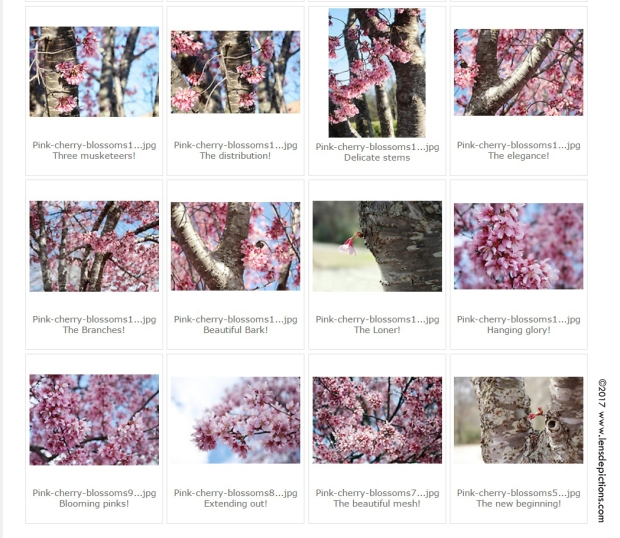 Download Free HD Wallpapers For March 2017 & Know 5